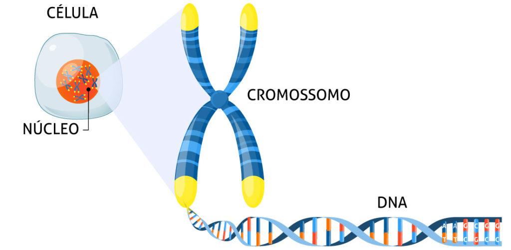 Estrutura do DNA