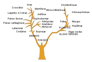 arvore_filogenetica