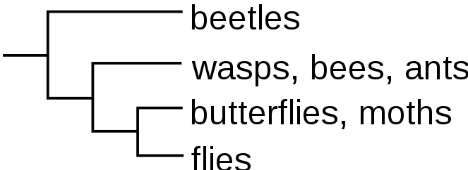 arvore_filogenetica_cladograma_horizontal_ancestral_esquerda