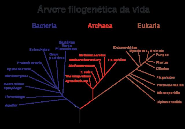 arvore_filogenetica_da_vida
