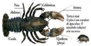 artropodes_crustaceo