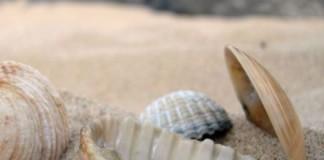 Moluscos_capa_conchas
